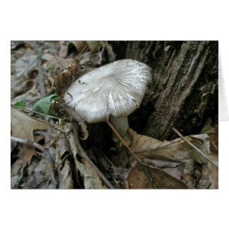 White Silk Mushroom Note Card
