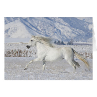White Snow Stallion Horse Greeting Card