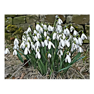 White snowdrop, first spring flower postcard