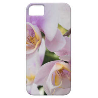 White Soft Orchids Blooming iPhone 5 Case