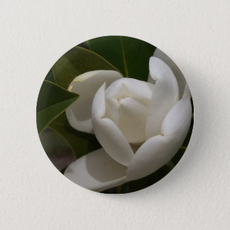 white southern magnolia flower bud 2 inch round button