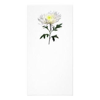 White Spider Mum Card
