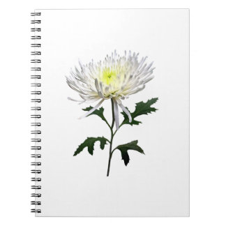 White Spider Mum Notebook