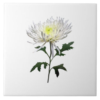 White Spider Mum Tile