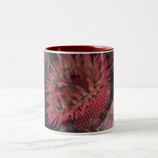 White-spotted Rose Anemone Two-Tone Coffee Mug