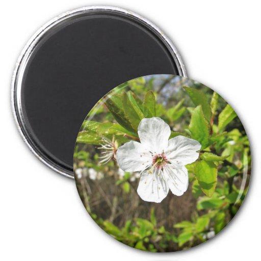 White Spring Blossom Fridge Magnet