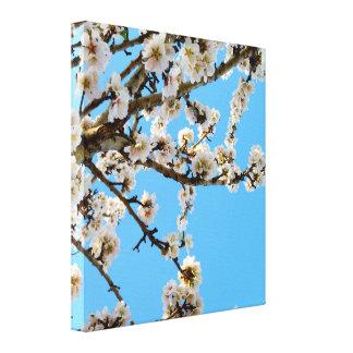 White Spring Blossom On Tree, Canvas Print