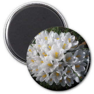 WHITE SPRING CROCUSES MAGNET