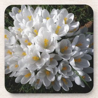 WHITE SPRING CROCUSES Square Drink Coaster