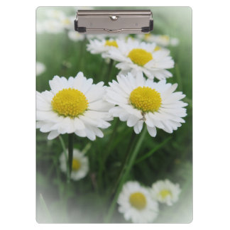 white spring flower in green grass clipboard