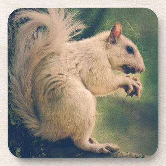 White Squirrel Coaster