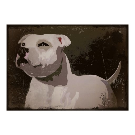 White Staffordshire Bull Terrier urban background Poster