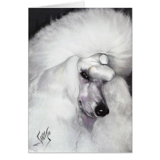 White Standard Poodle 1 23 10 Card