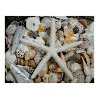 White Starfish and Tropical Shells Huge Poster