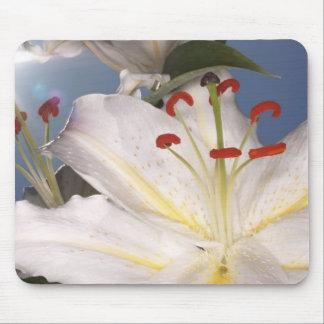 White stargazer lilies (Lilium orientalis), Mouse Pad