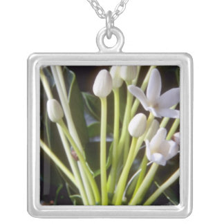 white Stephanotis floribunda flowers Silver Plated Necklace