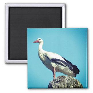 White Stork 2.02 (Storch) Magnet