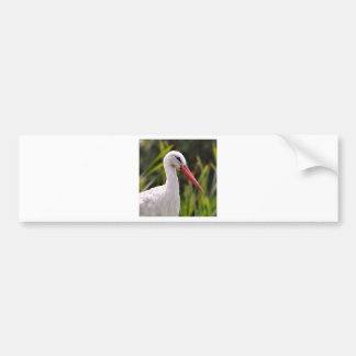 White stork among vegetation bumper sticker