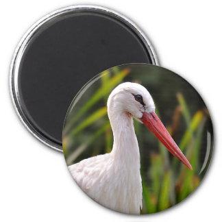 White stork among vegetation magnet