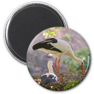 White storks on its nest magnet