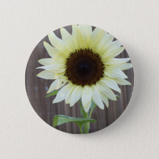 White sunflower against a weathered fence 2 inch round button