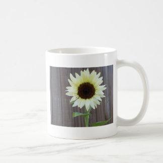 White sunflower against a weathered fence coffee mug