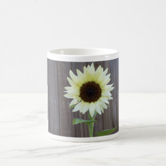 White sunflower against a weathered fence coffee mug