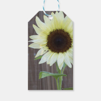 White sunflower against a weathered fence gift tags