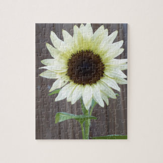 White sunflower against a weathered fence jigsaw puzzle
