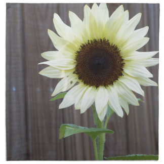White sunflower against a weathered fence napkin