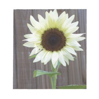 White sunflower against a weathered fence notepad