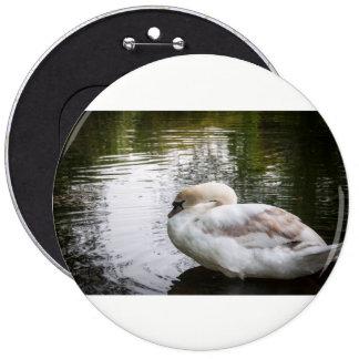 White swan 6 inch round button