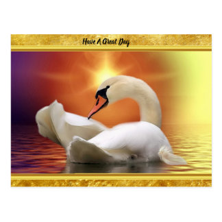 White Swan in a lake with a orange gold sunset Postcard