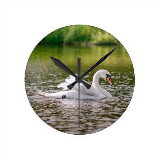 White swan on a lake clocks