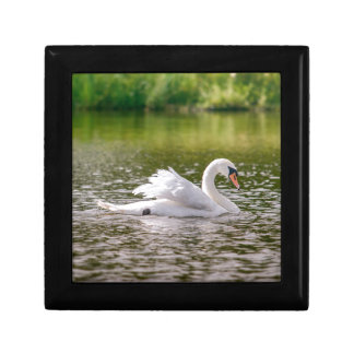 White swan on a lake gift box