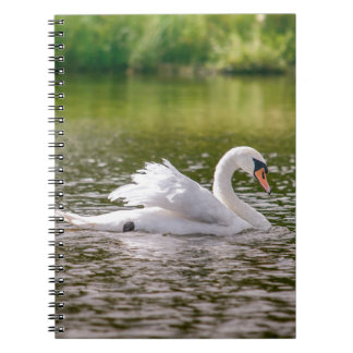White swan on a lake note books