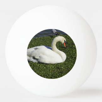 White Swan Ping Pong Ball