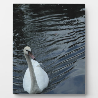White Swan Plaque