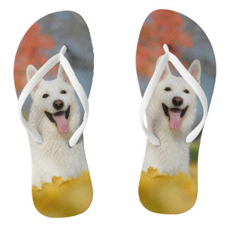 White Swiss Shepherd Dog Photo / Cute Furry Friend Flip Flops