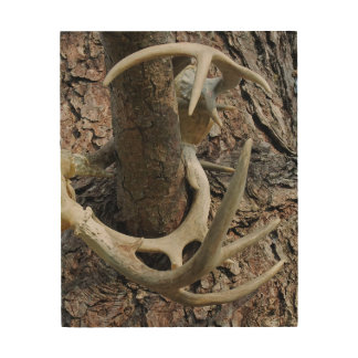 White Tail Deer Antlers Photographic Art