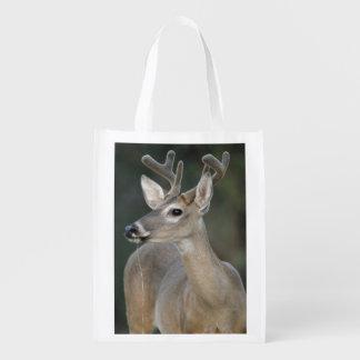 White-tail Deer Buck in velvet nice antlers drink Market Totes