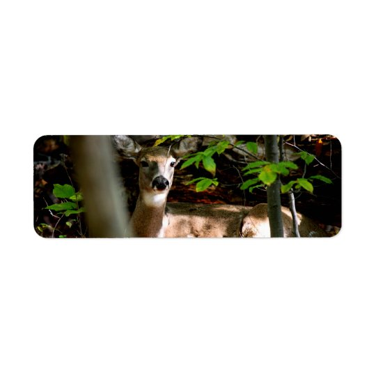 White Tail Doe Return Address Label