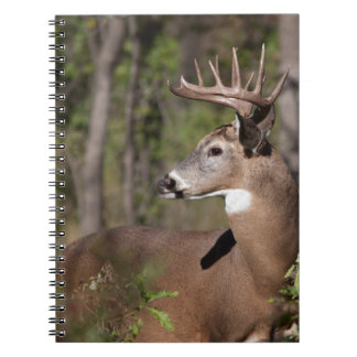 White Tail Ten Point Buck Spiral Note Book