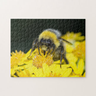 White-tailed Bumblebee Puzzles