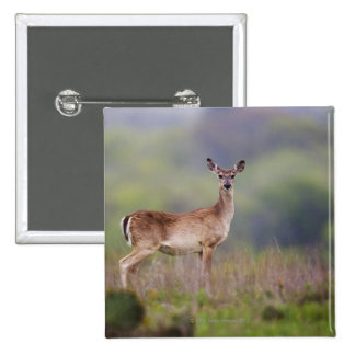 White-Tailed Deer 2 Inch Square Button