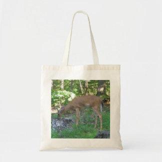 White Tailed Deer At Stump Tote