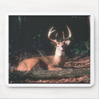 White Tailed Deer Buck Photo Mouse Pad