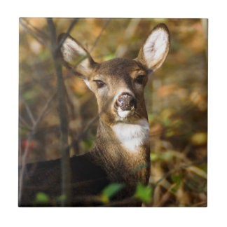 White-Tailed Deer Ceramic Photo Tile
