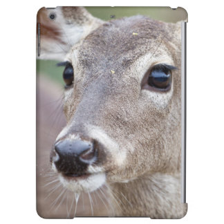 White-tailed Deer doe drinking water iPad Air Cover