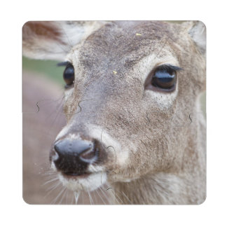 White-tailed Deer doe drinking water Puzzle Coaster